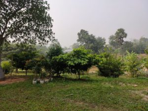 New Saplings for Plantation